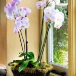 How to Grow Orchids Indoors