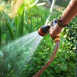 Gardening: How to Save Water