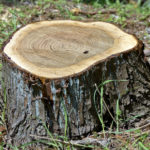 Four Tips to Remove Tree Stumps
