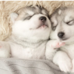 Choosing the Right Material for Your Dog's Blanket
